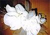 洋裁教室生徒作品-ウエディングドレス-04